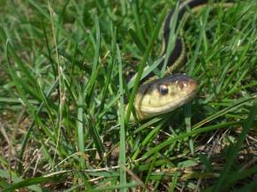snake2 USA